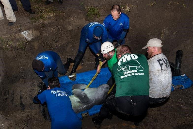 Resgate SeaWorld Flórida