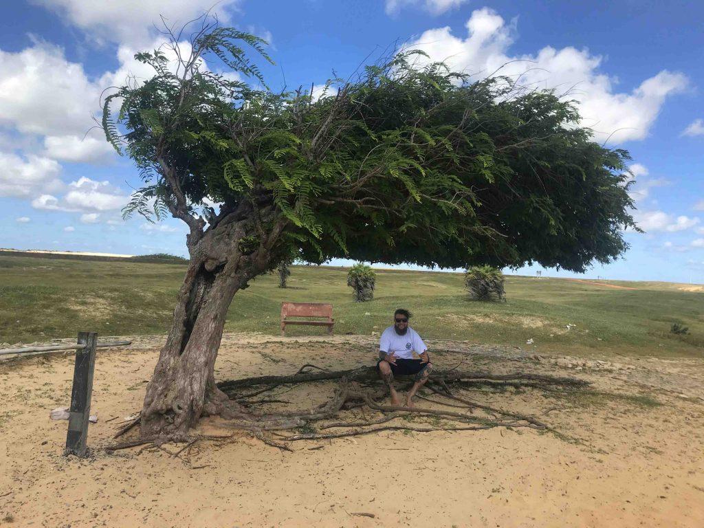 Dicas de viagem pela Rota das Emoções - Árvore Penteada